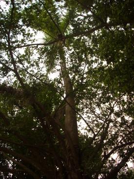 樹1.jpg