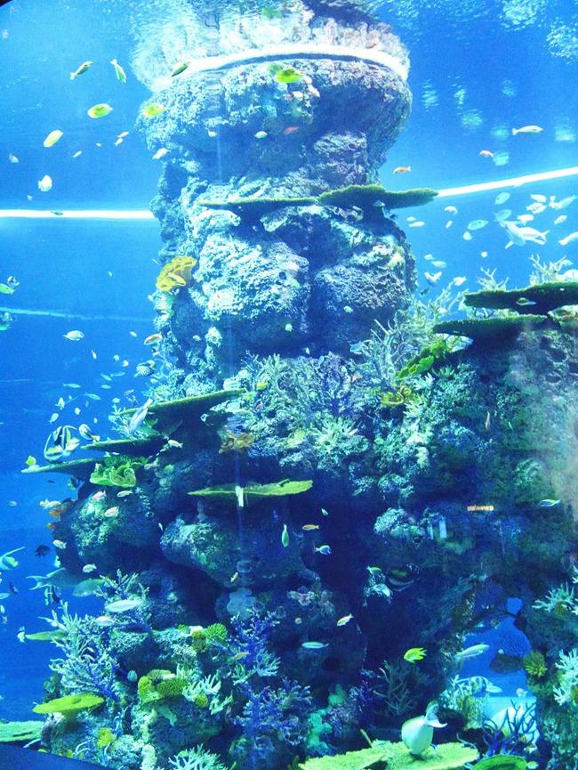 │新加坡│親子7天6夜自由行Day3。全球最大的海洋館魚兒魚兒樂悠遊-海洋館S.E.A