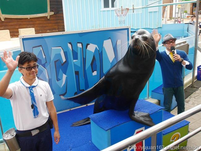 │遊。花蓮│花蓮海洋公園。親子旅行 海豚表演 晃晃海獅秀