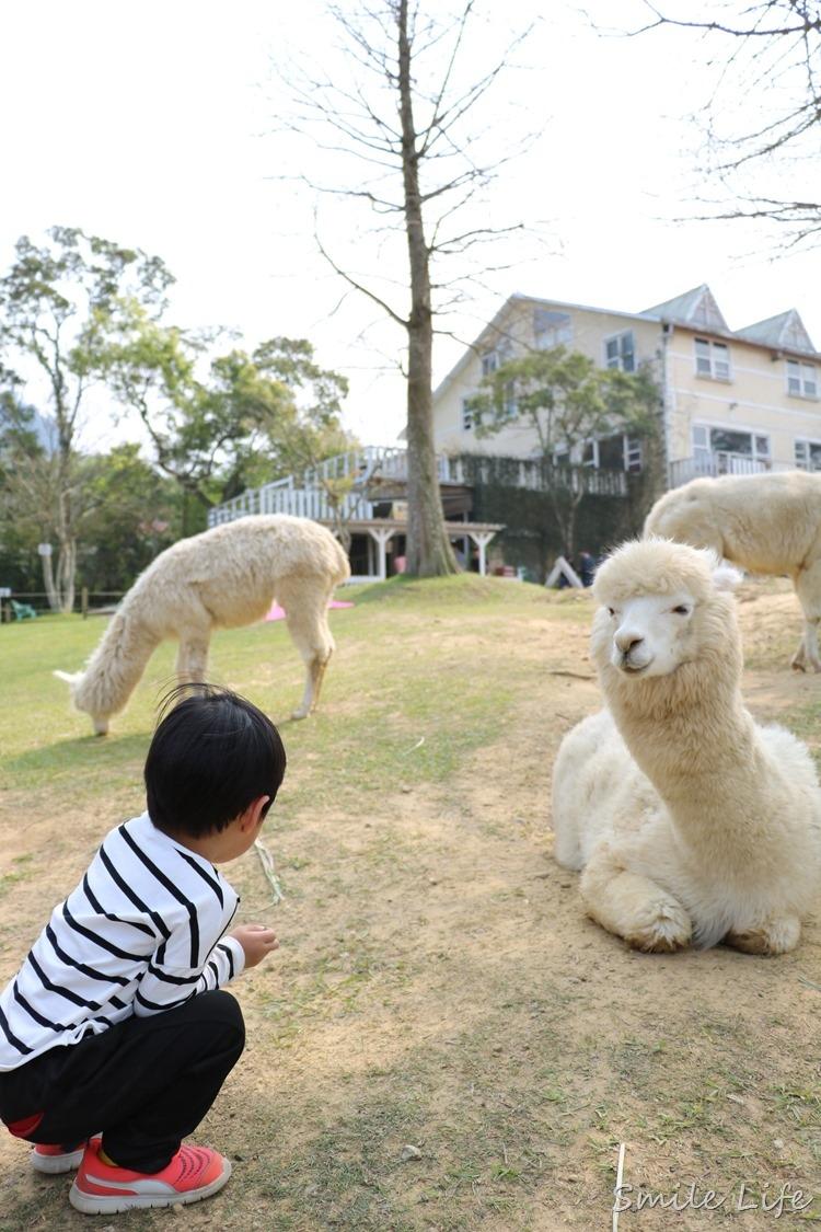 ▌桃園▌美拍秘境「富田花園農場」親子草坪、野餐、騎車、餵動物…還有萌萌草泥馬愛自拍。超殺底片!