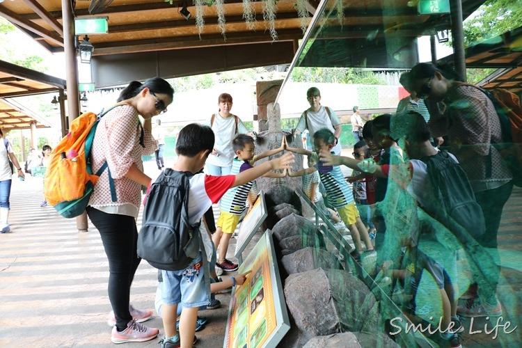 ▌新加坡▌5天4夜親子團。亞洲唯一天然雨林河川野生動物園「河川生態館」