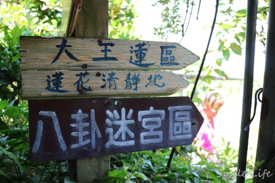 ▌桃園親子景點▌2018桃園觀音鄉蓮花季。蓮荷園休閒農場坐大王蓮花、吃蓮花冰消暑