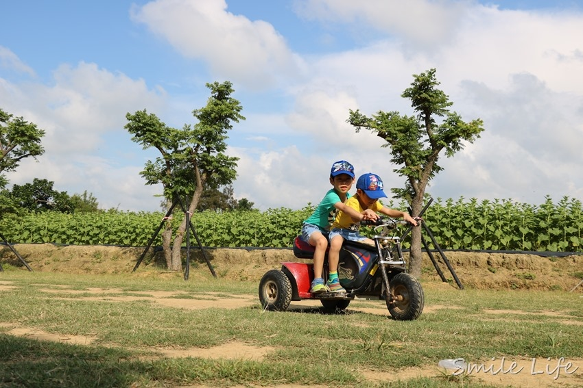 ▌桃園親子景點▌免門票。向陽農場 超美向日葵花海。採花、小火車、餵小動物、戲水、童玩遊戲…