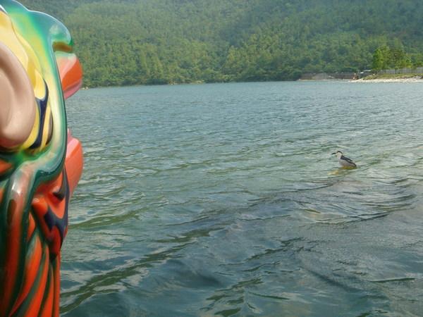 我們的目標~追逐小鳥還有追逐別人的情侶天鵝船