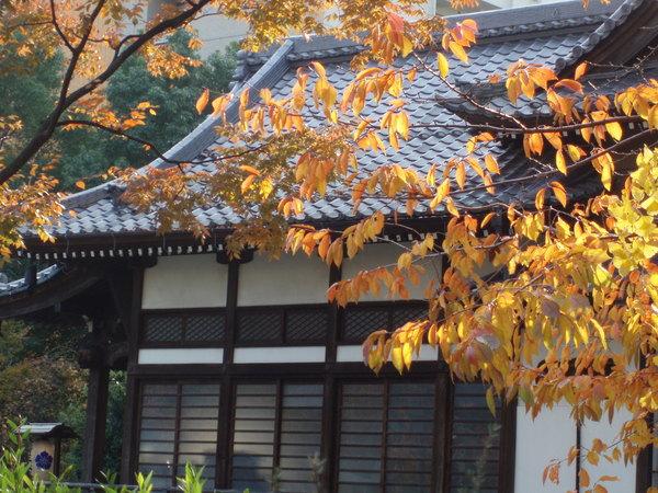 東日本橋楓葉步道
