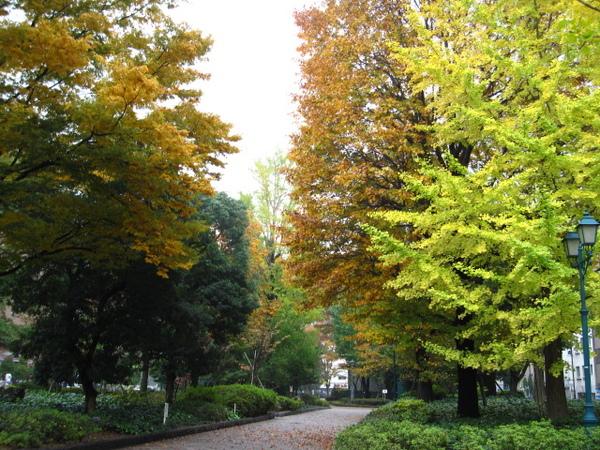 2008年楓葉