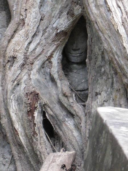 塔普倫神廟31-樹中的微笑.JPG