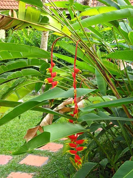 奇妙植物2
