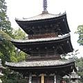 matuyama-sakura 055.jpg