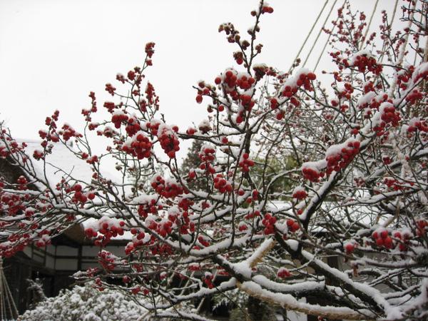 雪地上的小紅果