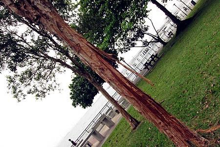 skin tree