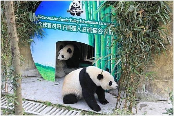 母子熊貓入駐熊貓谷儀式(前為奇珍後為真真)