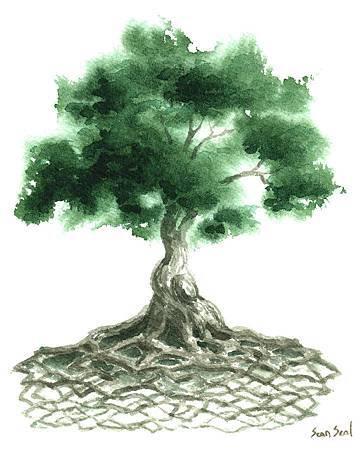 celtic-tree-of-life-sean-seal.jpg