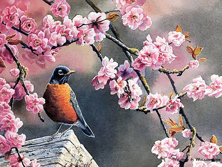 kb_Bourdet_Susan-2007_Songbirds_Wallpaper-03_wallcoo.com.jpg