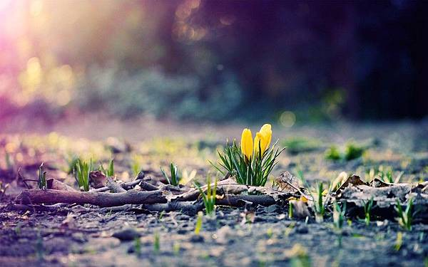 content_womany_Spring_Nature_In_The_Morning_picspaper_com_1424837086-2907-5880.jpg