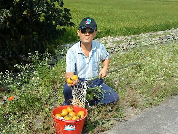 摘下的水柿子用桶子裝滿.JPG