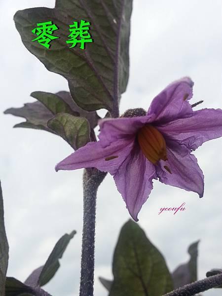 茄子-2(已用).jpg