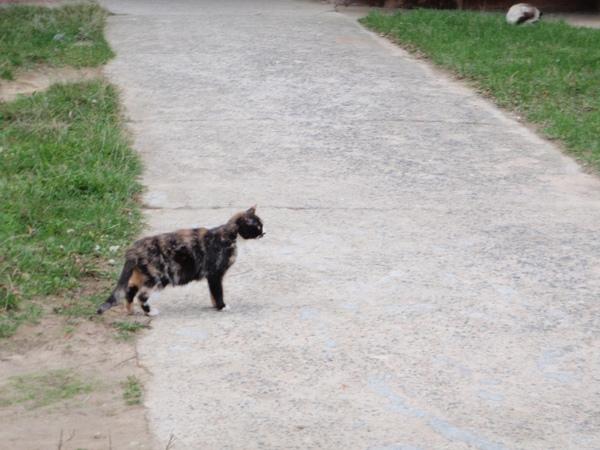033 by street cat