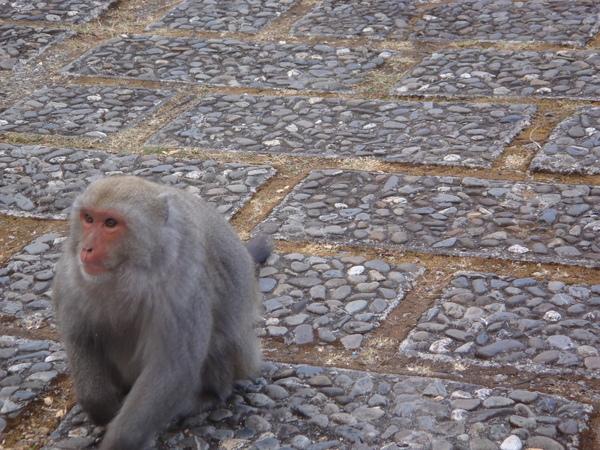 Monkey牠想吃東西...