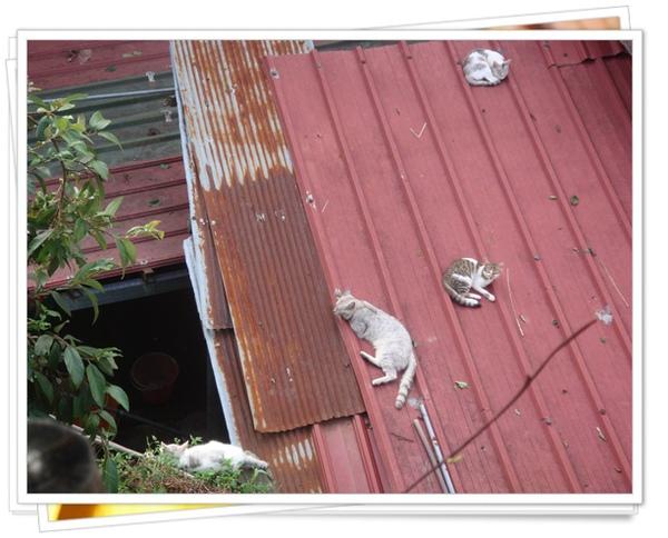 cats-577444.jpg