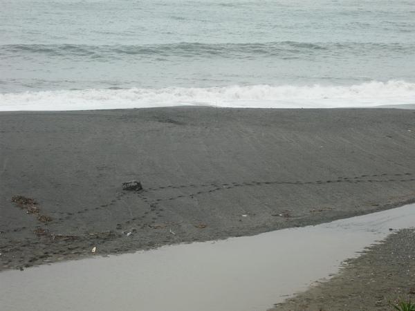 前晚海邊散步的腳印