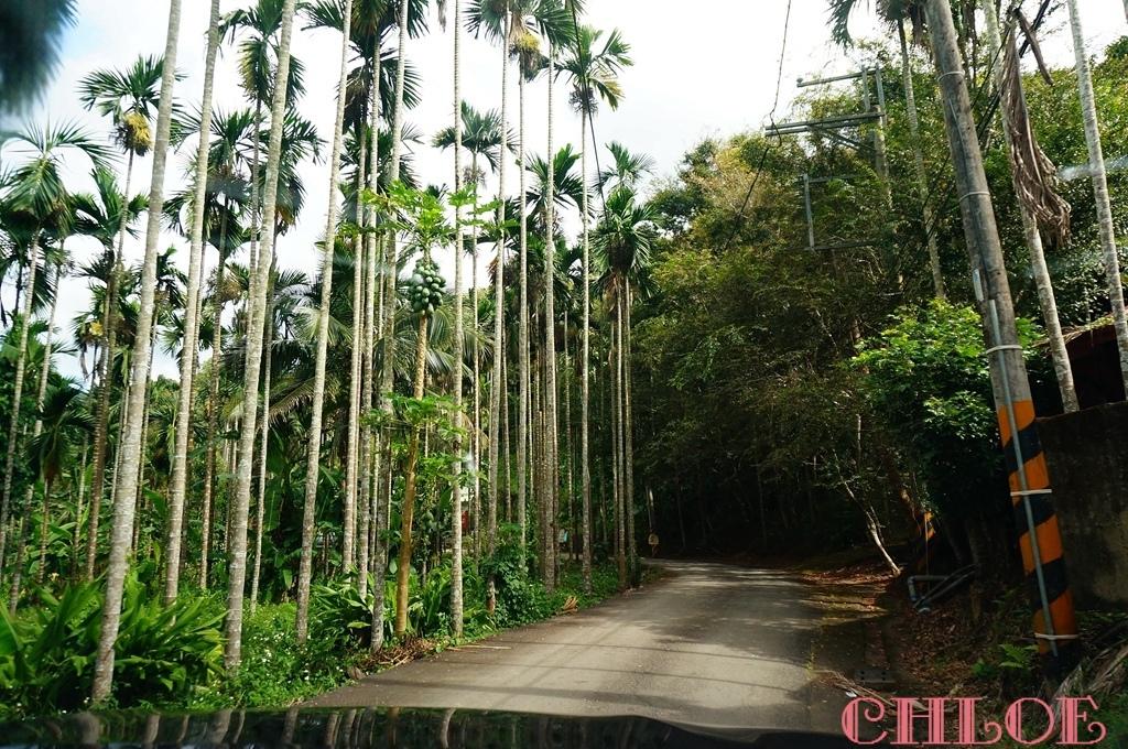 黃金森林16.jpg