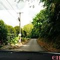 黃金森林15.jpg