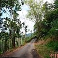 黃金森林18.jpg