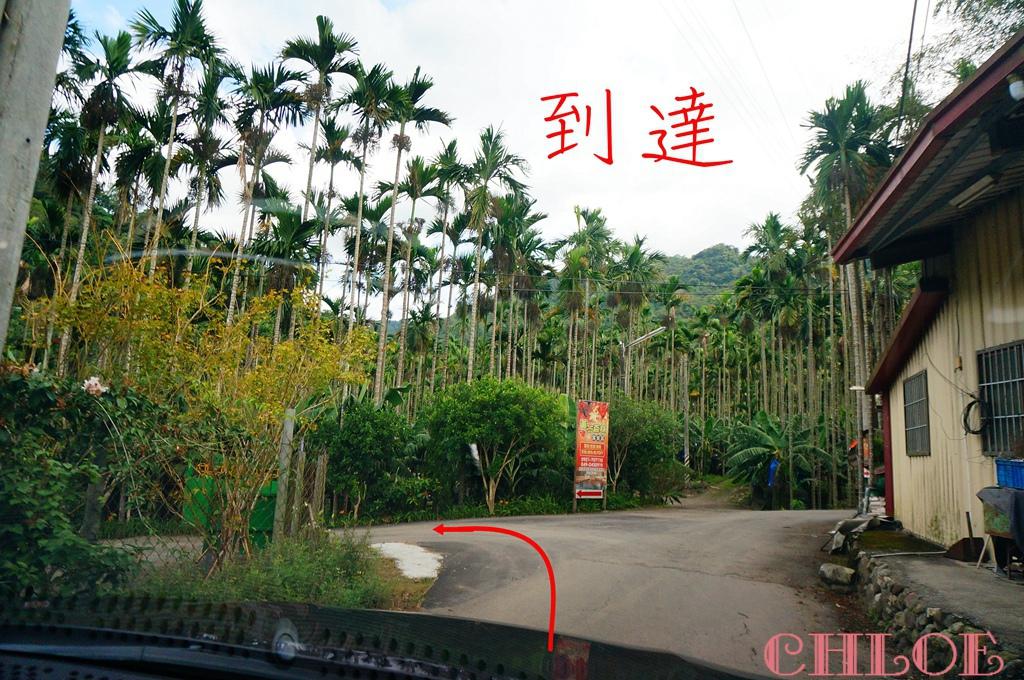 黃金森林21.jpg