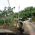 黃金森林20.jpg