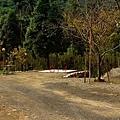 黃金森林23.jpg