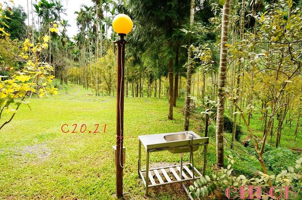 黃金森林25.jpg