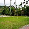 黃金森林38.jpg
