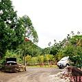 黃金森林42.jpg