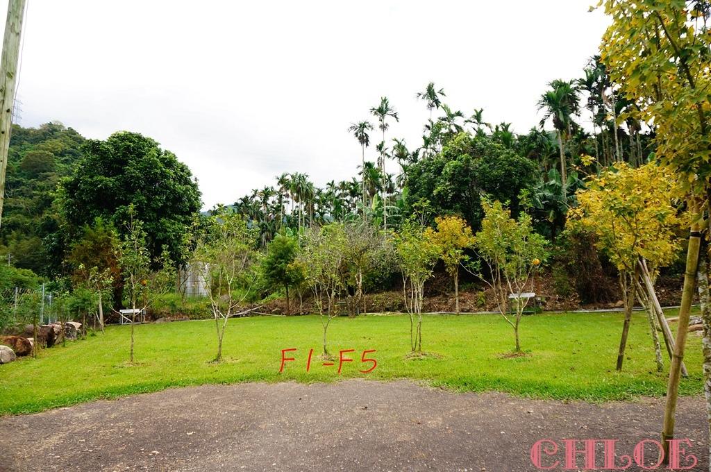 黃金森林44.jpg