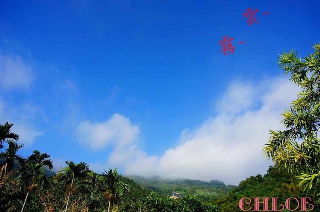 黃金森林54.jpg