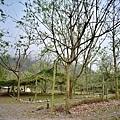 天時農莊-梅香區21.jpg