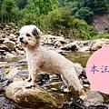 DSC05814_副本.jpg