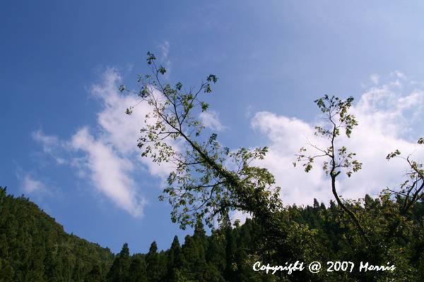 漫步杉林溪 (4).jpg