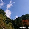 漫步杉林溪 (3).jpg
