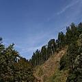 漫步杉林溪 (2).jpg