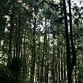 漫步杉林溪 (1).jpg