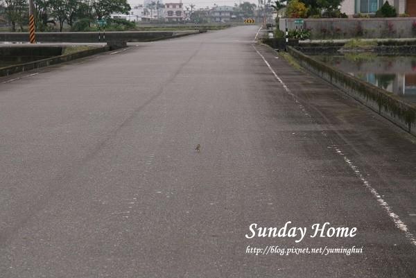Sunday Home 民宿 (36).jpg