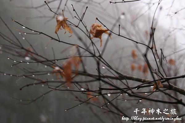馬告生態公園--神木園 (61).jpg