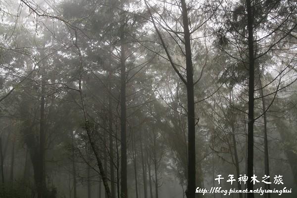 馬告生態公園--神木園 (60).jpg
