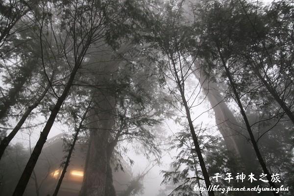 馬告生態公園--神木園 (59).jpg