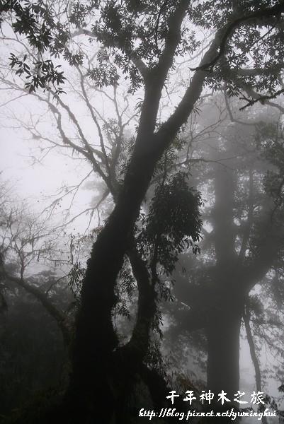 馬告生態公園--神木園 (58).jpg