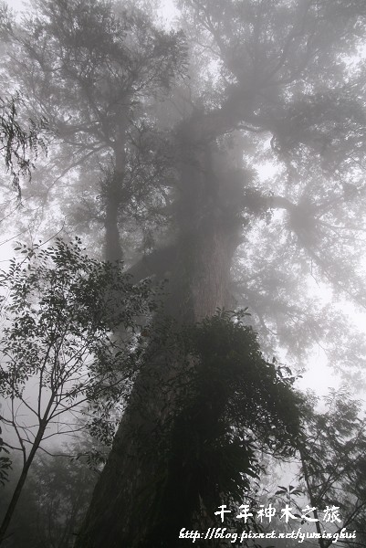 馬告生態公園--神木園 (57).jpg