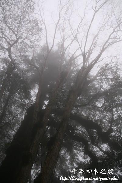 馬告生態公園--神木園 (56).jpg