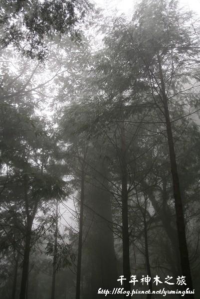 馬告生態公園--神木園 (55).jpg